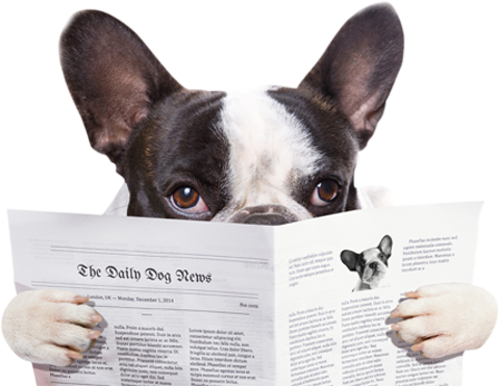 Cachoro segurando jornal